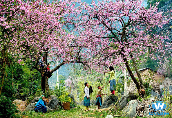 Bức tranh ngàn hoa trong những ngày đầu xuân