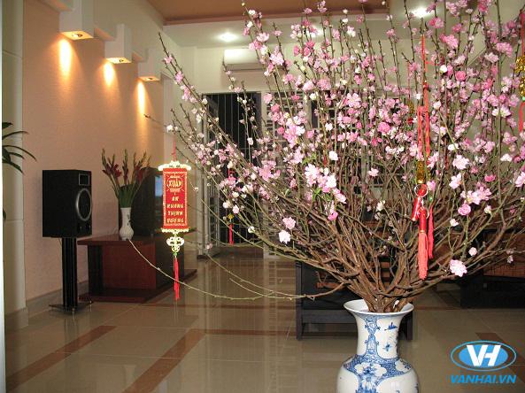 Hoa đào là biểu tượng của Tết miền Bắc