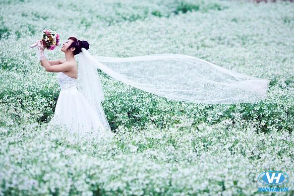 Cánh đồng hoa cải là một địa điểm chụp ảnh cưới lãng mạn