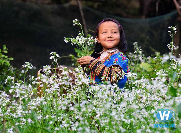 Vườn hoa cải trắng ở gần rừng thông Bản Áng