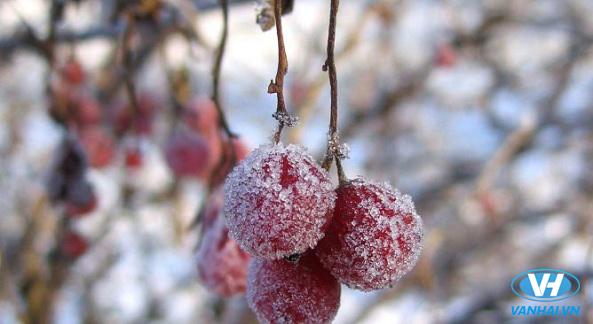 Trải nghiệm du lịch mùa đông như ở châu Âu