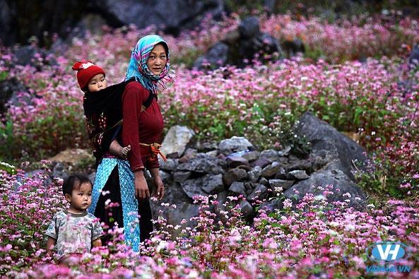 Không gian hoa cỏ xinh tươi của cao nguyên đá