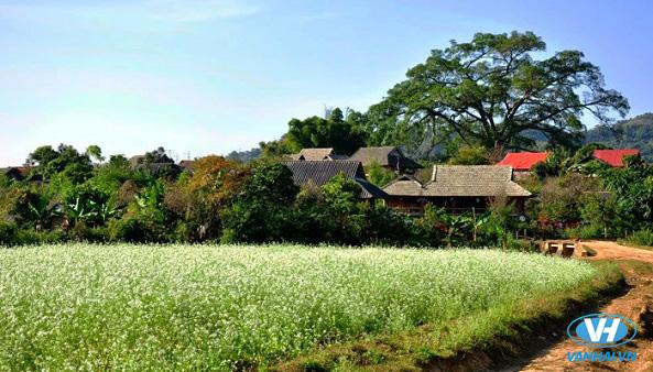 Mộc Châu với phong cảnh muôn hình muôn vẻ