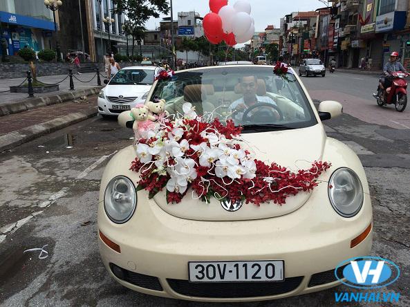 Xe cưới Volkswagen mui trần thời thượng