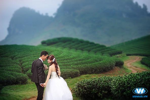 Đồi chè Mộc Châu là background chụp hình cưới vô cùng ấn tượng