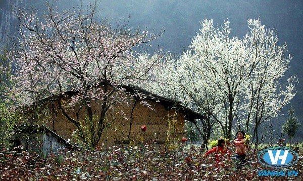 Du lịch Hà Giang tháng 11 là thời điểm lý tưởng