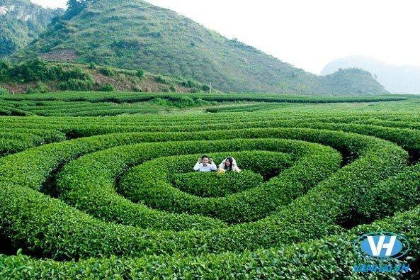 Cảnh sắc thiên nhiên tươi đẹp ở Mộc Châu