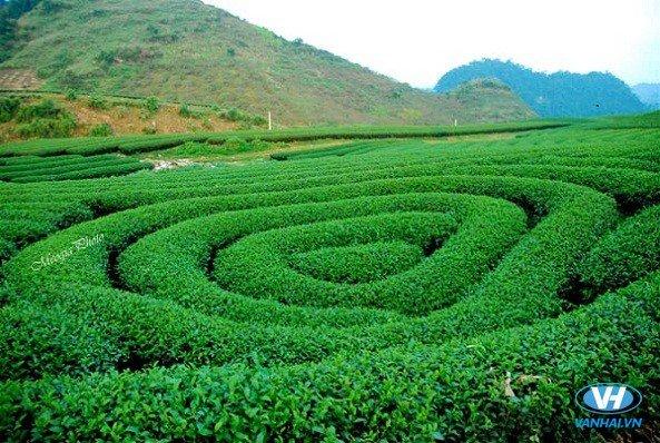 Hòa mình trong thiên nhiên đầy hoa cỏ của thảo nguyên Mộc Châu