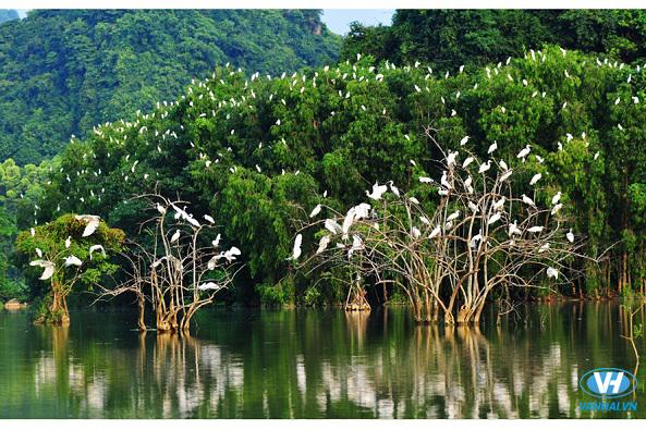 Vườn chim Thung Nham có nhiều loài chim quý