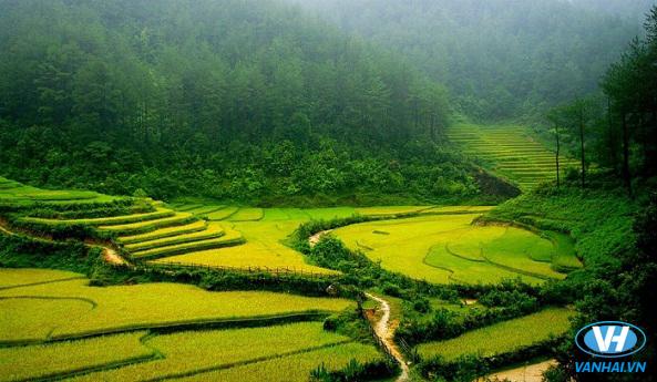 Chiêm ngưỡng cánh đồng lúa vàng óng ả ở La Pán Tẩn